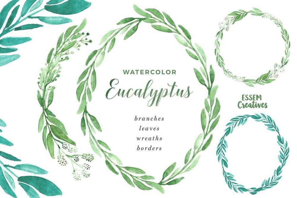 Watercolor Eucalyptus Clipart, Eucalyptus Branches Wreaths Borders ...