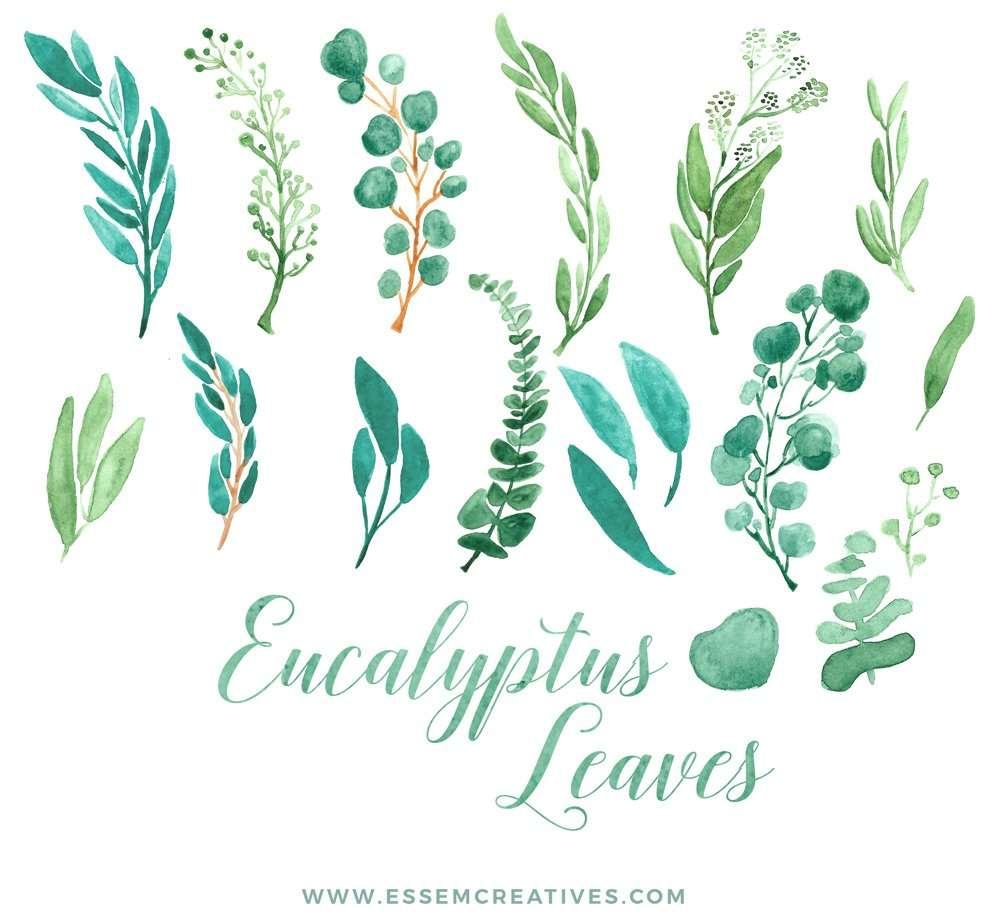 Watercolor Eucalyptus Clipart Eucalyptus Branches Wreaths