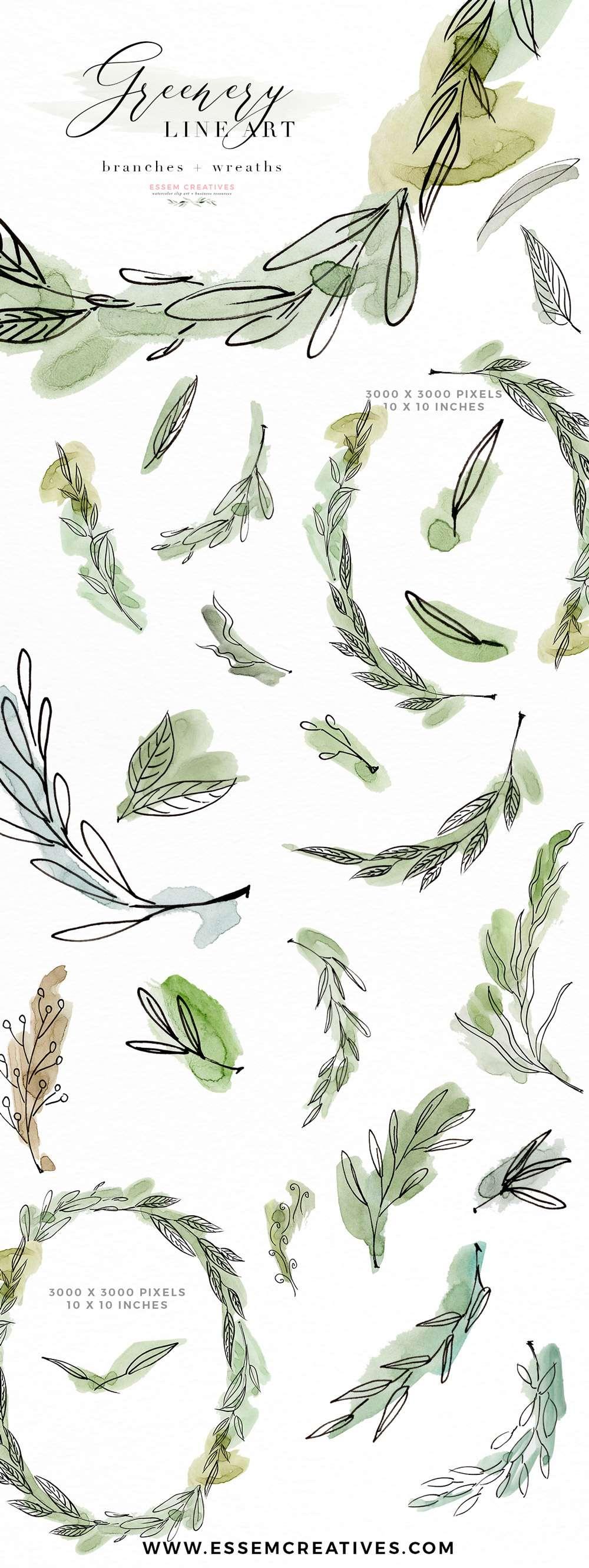 Line Art Watercolor : Greenery line art watercolor clipart olive eucalyptus