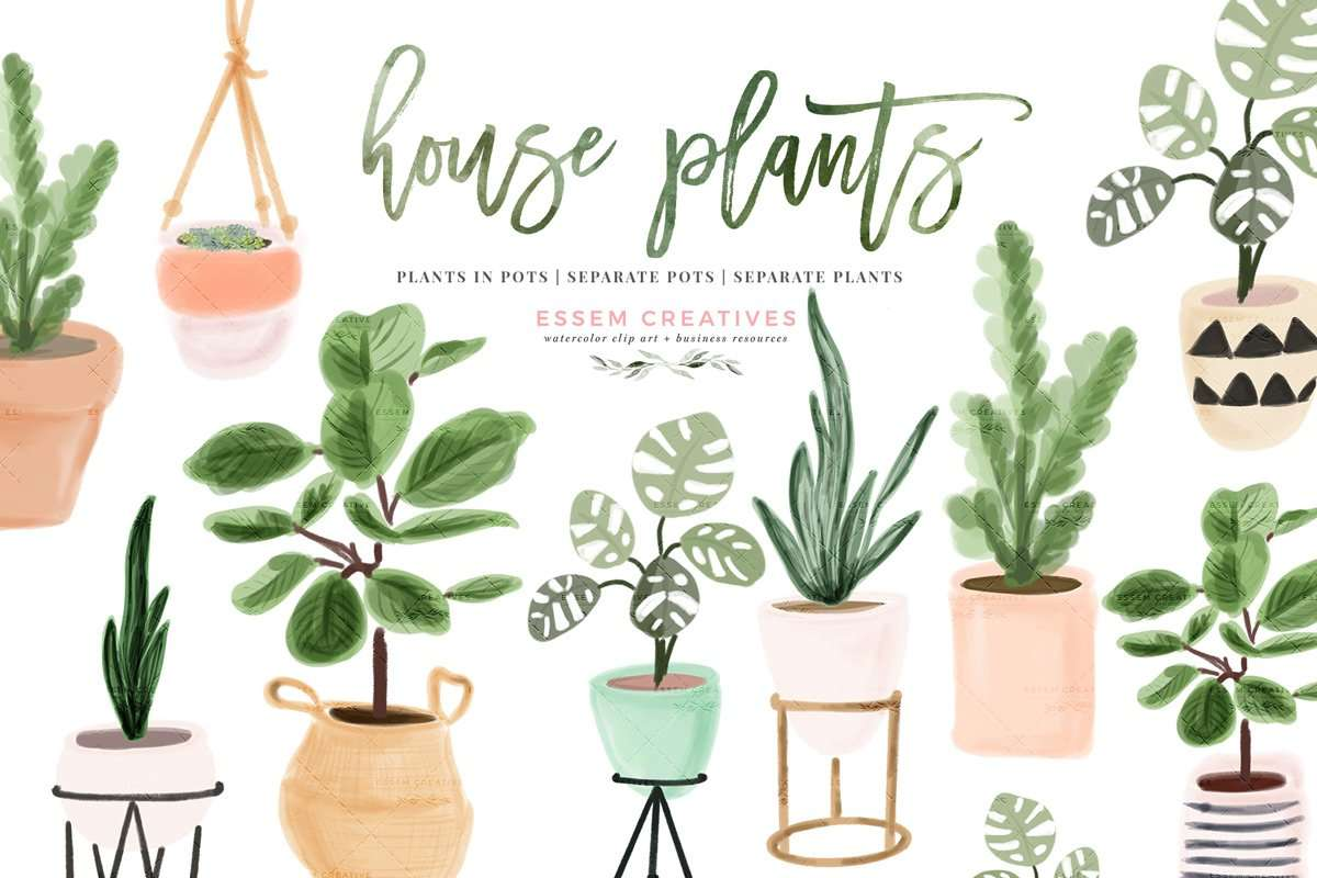 Watercolor House Plant Clip Art Indoor Plants Potted Plant Graphics Illustrations