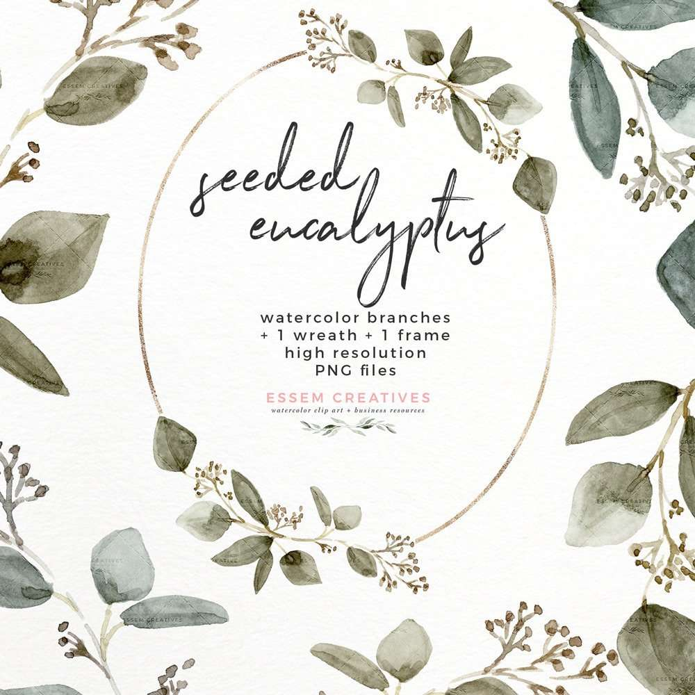 Seeded Eucalyptus Watercolor Leaves Clipart Graphics with Transparent  Background