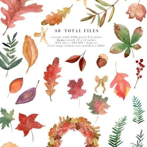 $7.90 Instant Digital Download: Watercolor fall leaves clipart, Autumn separate leaf branches foliage Watercolor Graphics Illustrations, Fall Wedding Bridal Shower Birthday Party Baby Shower Thanksgiving Halloween invitation and decor, Hand drawn leaves & fall wreath with transparent background PNG file, Planner stickers dashboard. Oak, Tulip poplar, Beech, Gingko, Chestnut, Hawthorn, Maple, Sycamore, Birch, Willow, Eucalyptus, Yew, and filler foliage Click to see more>> #fall #fallfoliage