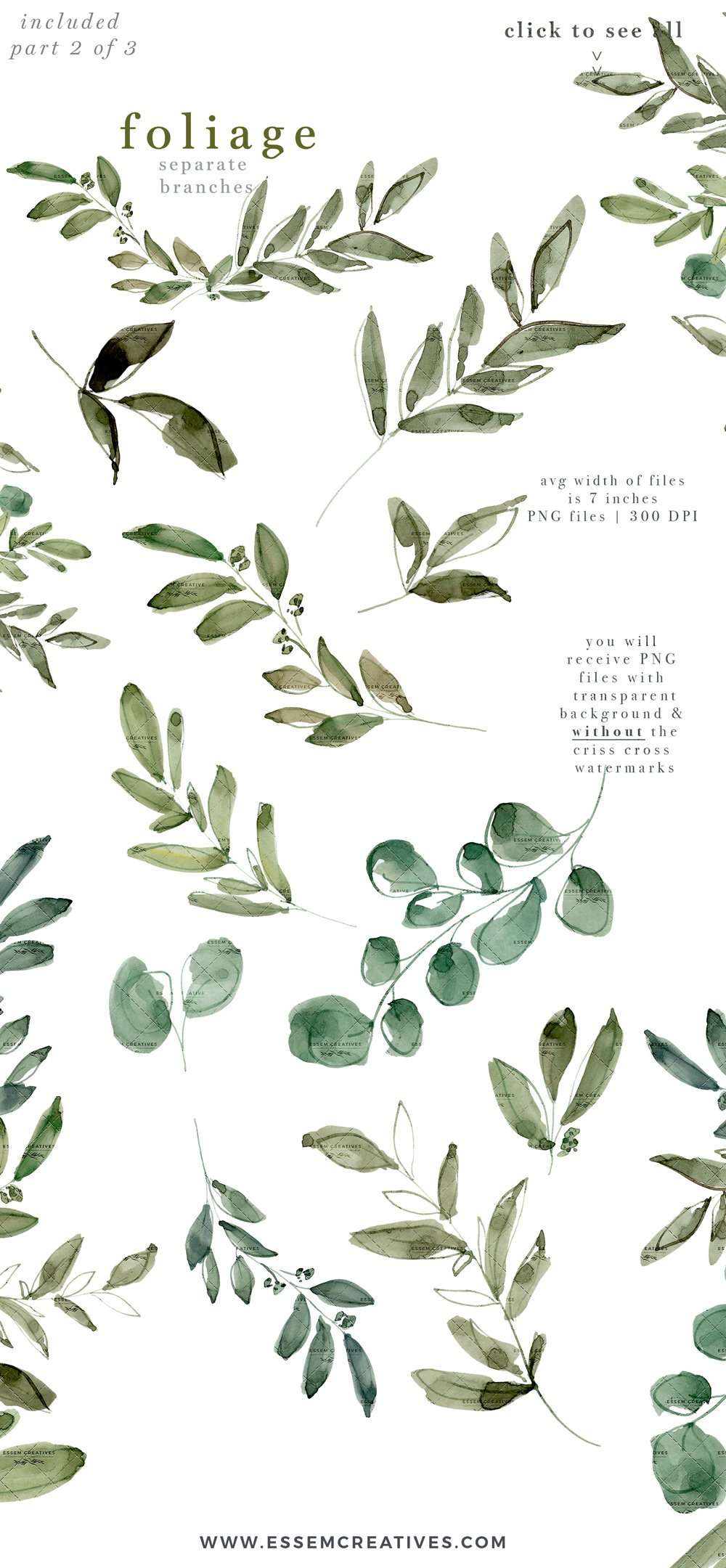 watercolor eucalyptus clipart  greenery foliage green leaf
