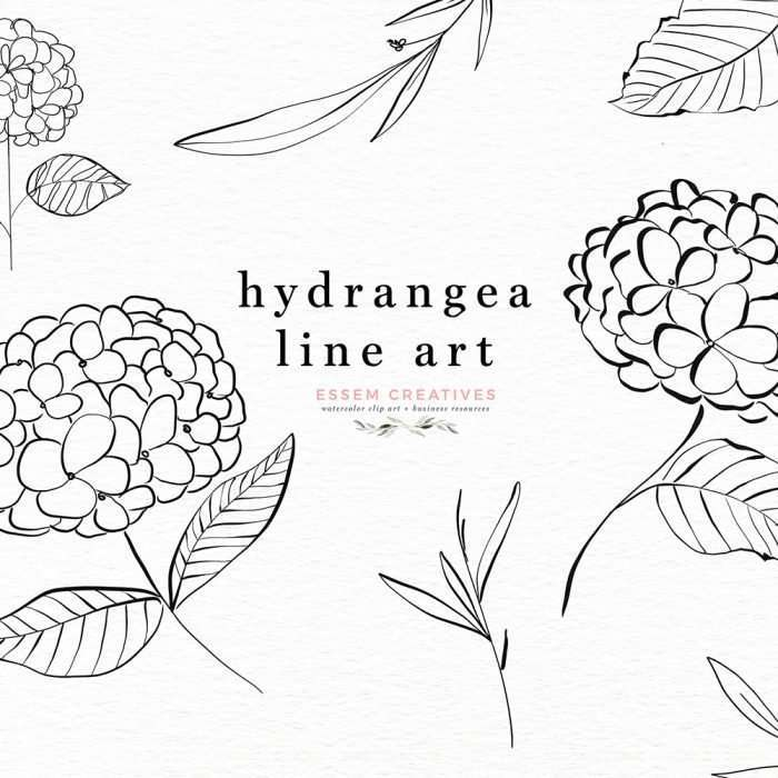 Hydrangea Line Art Botanical Illustration Clipart Graphics with Transparent Background | Botanical Line Art wedding invitations, save the date card, gender reveal party invites, gender neutral baby shower invitations, posters flyers, scrapbooking resources, surface pattern illustration, digital planner stickers, flower logo & brand design, nursery decor, photography backdrop, card borders | Click to see more>>